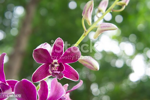 purple orchid flower with bokeh and green leaves background