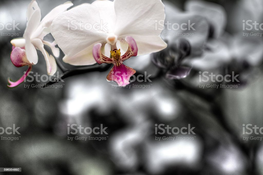 Purple Orchid Flowers HDR A royalty-free stock photo
