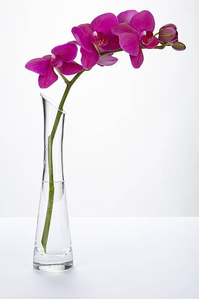 Purple orchid in einer vase – Foto