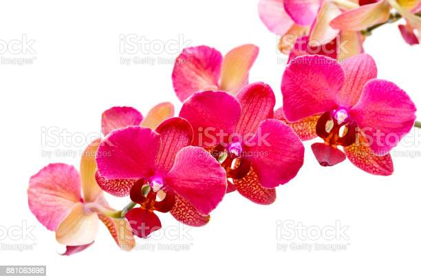 Purple orchid isolated on white background picture id881063698?b=1&k=6&m=881063698&s=612x612&h=qidsg6ulev78sjeqo4dctzdzjuf2qr2tpcfku3kuxiq=