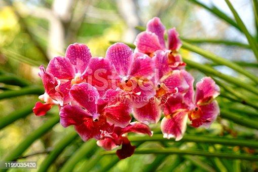Beatiful flower