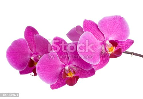 Beautiful purple orchid in full bloom. In aRGB color for beautiful prints.