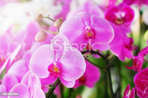 Purple orchid with beautiful in the garden.