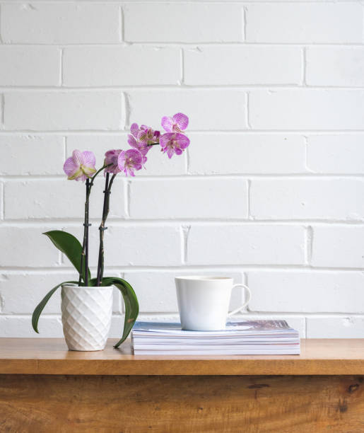 Purple orchid with cup and magazines on wooden table stock photo