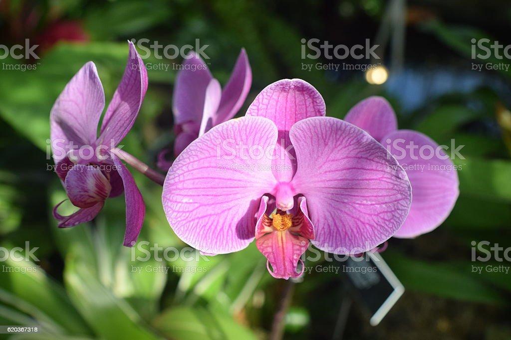 Purple Orchids - April 15,2016 zbiór zdjęć royalty-free