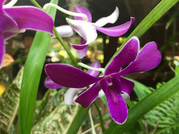 Purple orchids on the tree picture id1295752797?b=1&k=6&m=1295752797&s=612x612&w=0&h=iqcypxwuec3u7x  yg8bbcrdjkxsp3hnitno 2d9zsa=