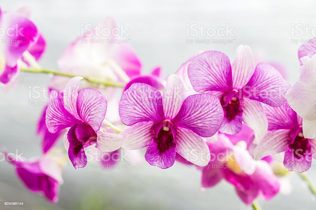 Purple orchids on vintage style. stock photo
