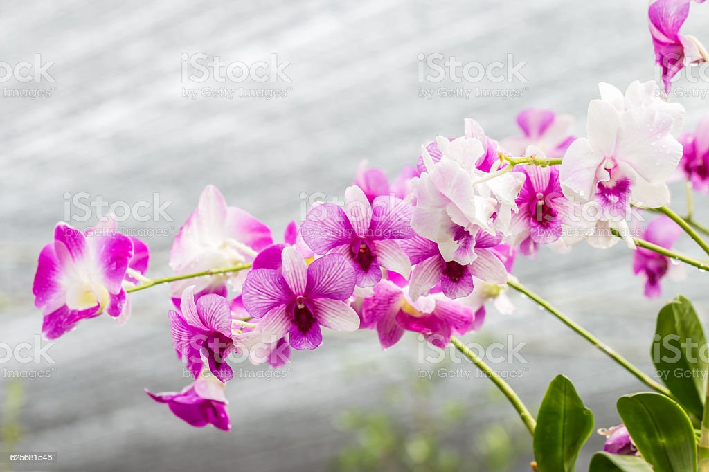 Purple orchids on vintage style. stock photo