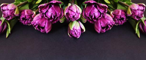 Purple peony tulip flowers picture id1195367438?b=1&k=6&m=1195367438&s=612x612&w=0&h=atrzhinxrc6 q3xlcfwqgfltaib1jaerj4bnf1j1ui0=