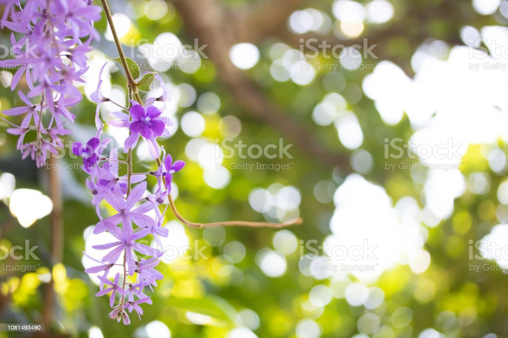 Royalty Free Queens Wreath Spring Season Decoration Pictures Images