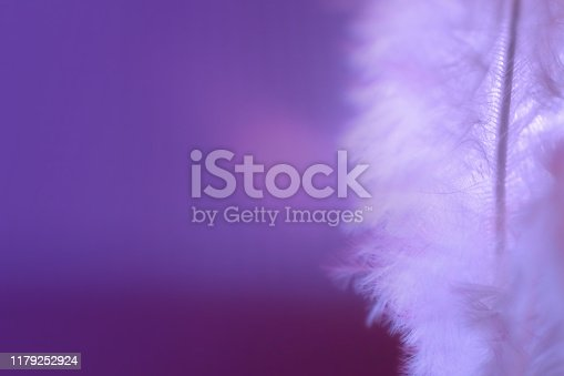 istock Purple Pink feather, soft focus with bokeh, feminine background backdrop macrophotography, extreme close up 1179252924
