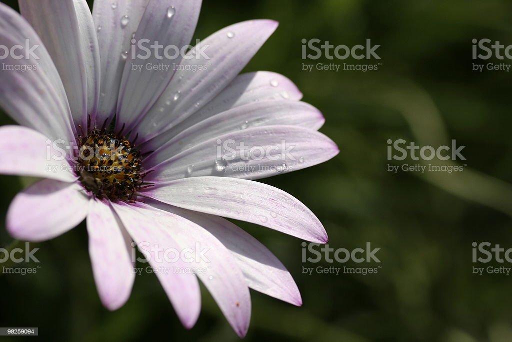 Purple plants royalty-free stock photo