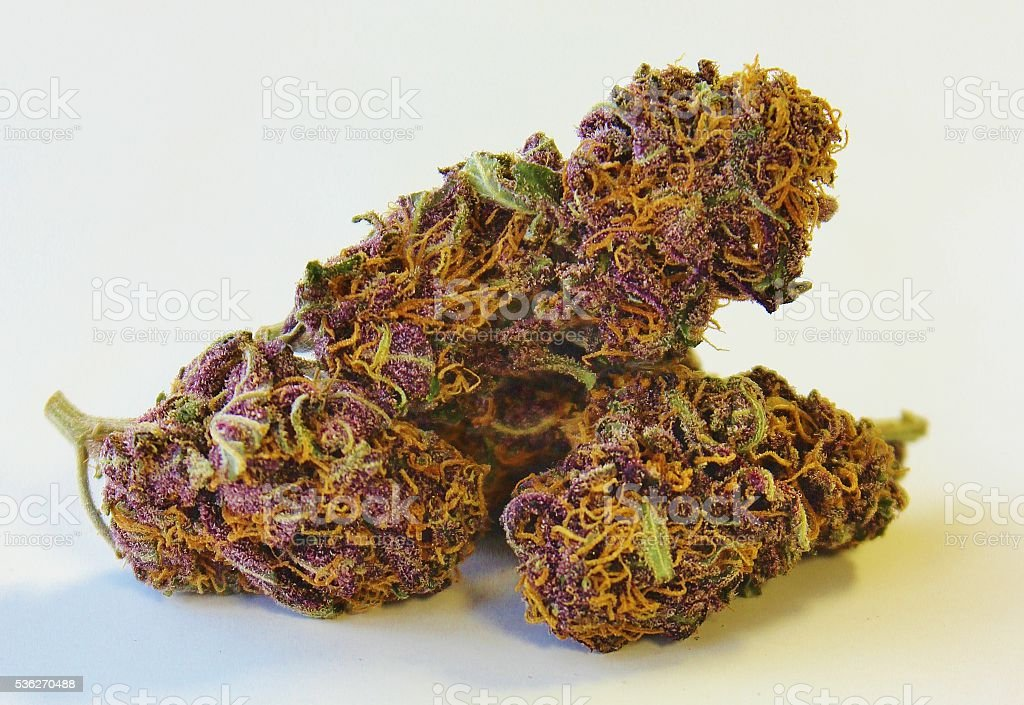 Purple Power Plant Marijuana Closeup stock photo
