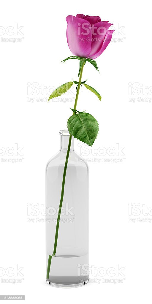Purple Rose In Glass Vase Isolated On White Background Royalty Free Stock Photo