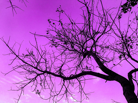 The shadow and shape of tree with purple color of sky which create beautiful landscape of sky.