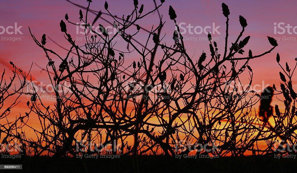 Purple Sky royalty free stockfoto