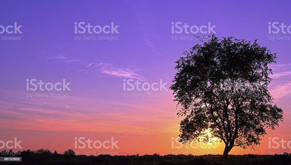 Purple sky with tree royalty-free stock photo