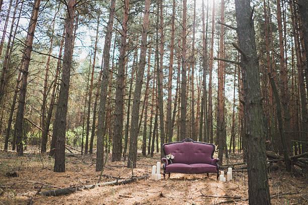 lila couch es stehen im wald - grüne wald hochzeiten stock-fotos und bilder