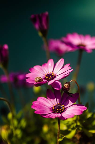 Purple spring flowers stock photo