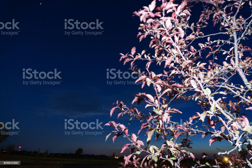 Purple Tree at Night stock photo