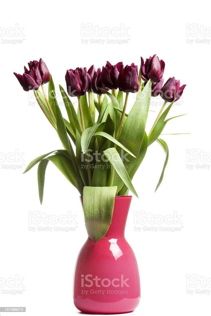 Purple Tulips in a Pink Bowl stock photo