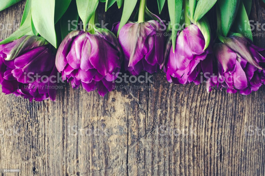 Purple tulips on wooden background stock photo