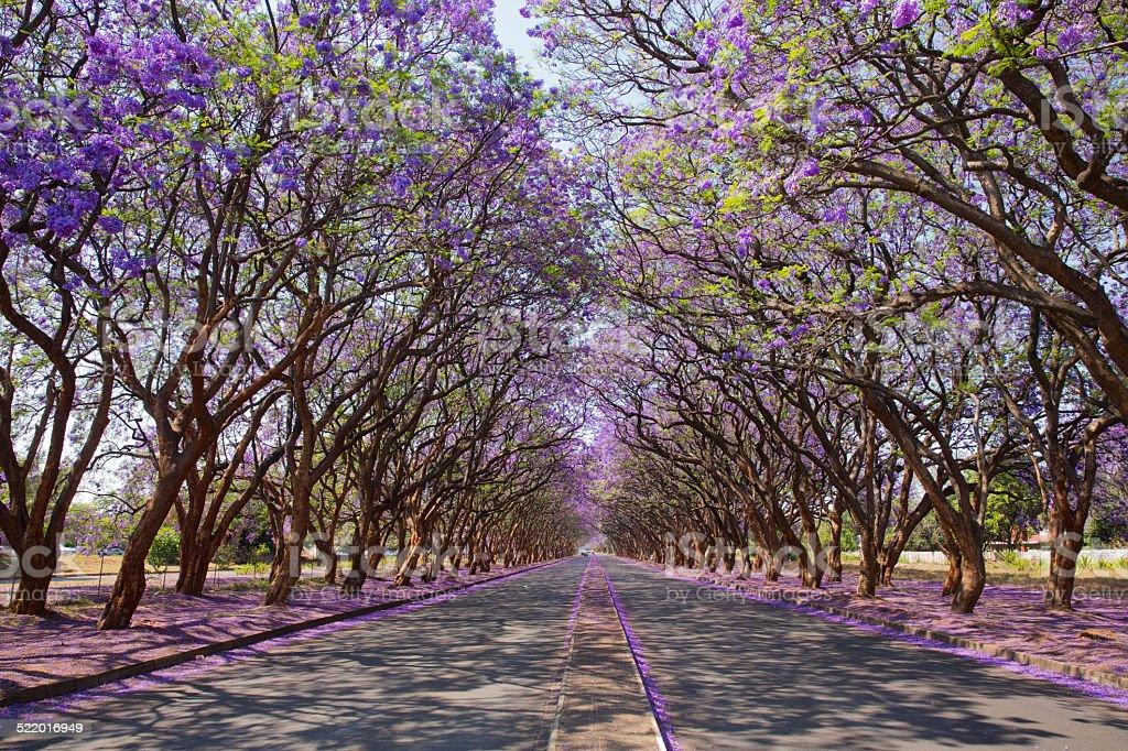 Purple tunnel stock photo