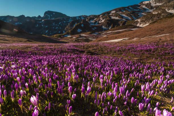 Purple Valley stock photo