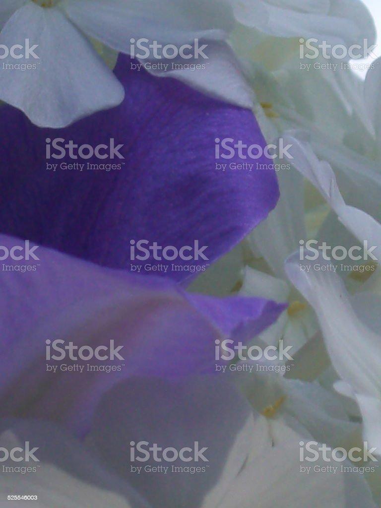 Purple white Petals Mix stock photo