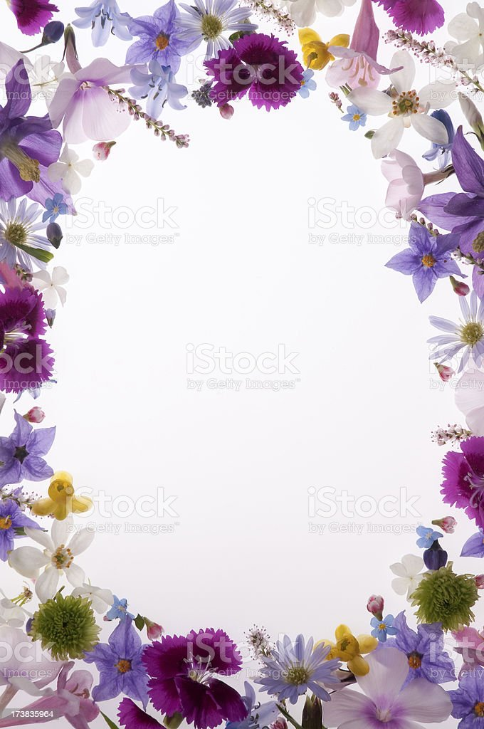 Purple, White, Yellow and Pink Spring Flower Border or frame stock photo