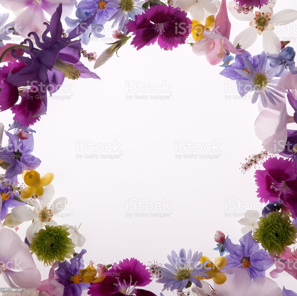 Purple white yellow and pink spring flower border or frame stock purple white yellow and pink spring flower border or frame royalty free stock mightylinksfo