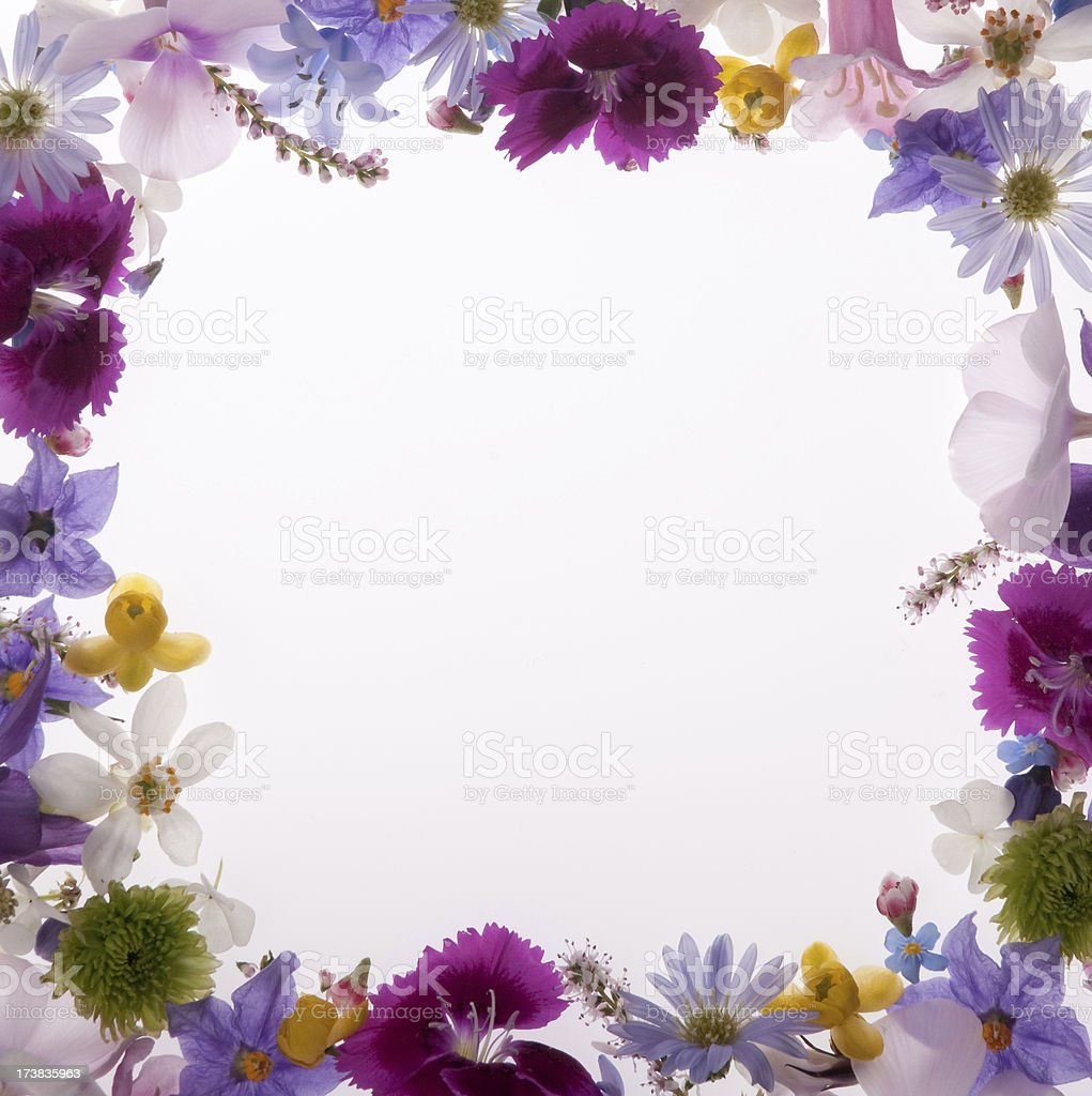 Purple, White, Yellow and Pink Square Flower Border or frame stock photo
