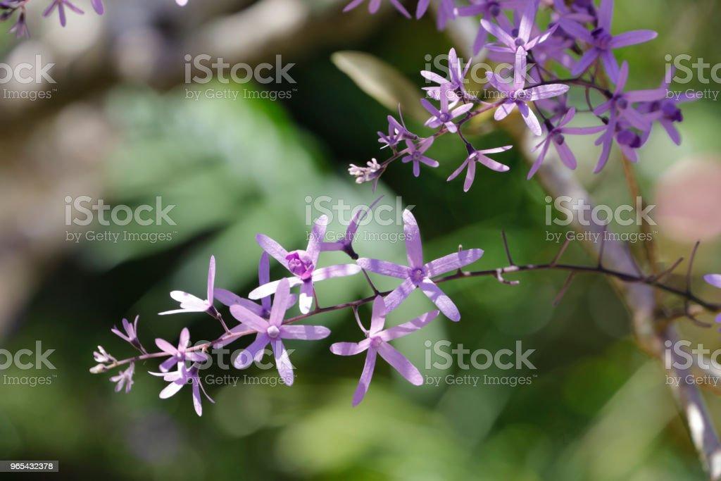 Purple wreath blossoming zbiór zdjęć royalty-free