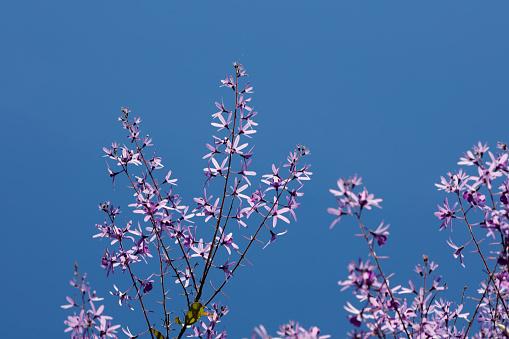 보라색 화 환 꽃 0명에 대한 스톡 사진 및 기타 이미지