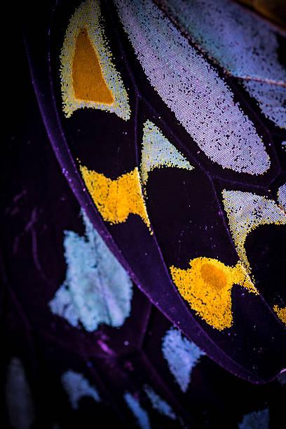 Purple yellow butterfly wing picture id471773451?b=1&k=6&m=471773451&s=612x612&w=0&h=klt4jjwkfgc1cfkrjog3rishbtje06wt8nehsrdpfxi=