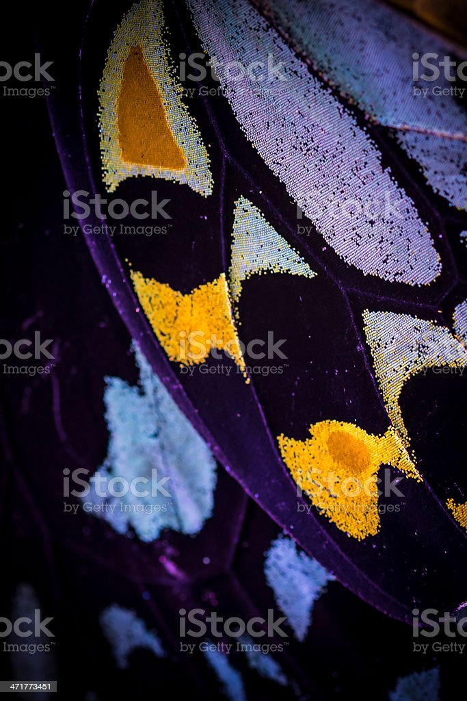 Purple yellow butterfly wing stock photo