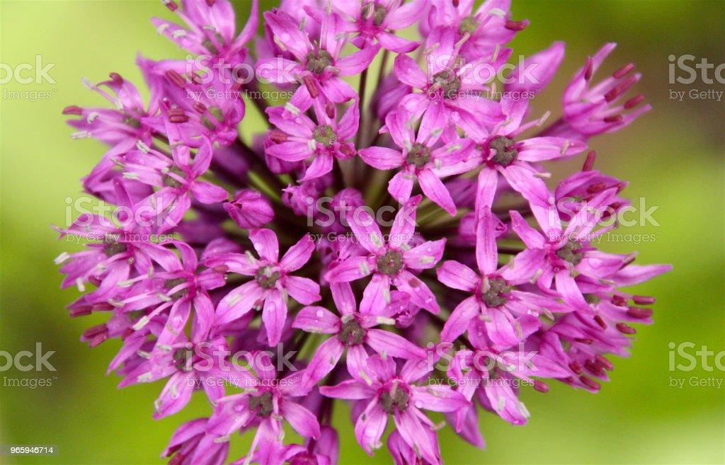 6 Purplez - Royalty-free Environment Stock Photo