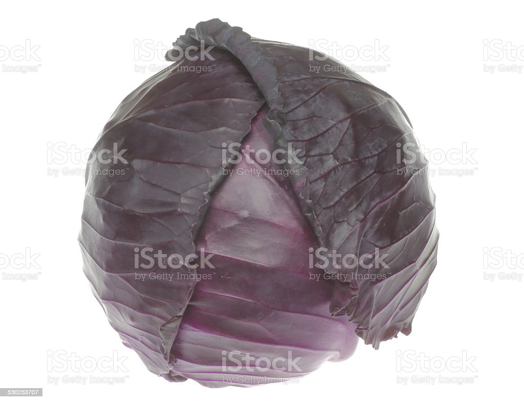 Purpple cabbage stock photo