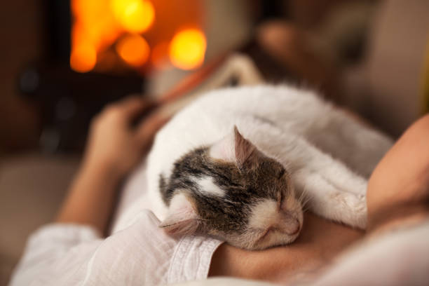 Purrfect evening woman relaxing with her kitten picture id1082418932?b=1&k=6&m=1082418932&s=612x612&w=0&h=t3s ka2po3oaghs xrtwoaipmebpsp irl iqtqeuqo=