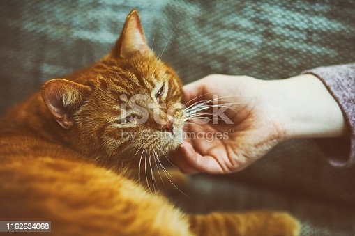 Orange cat on sofa with a woman had gently strocking.