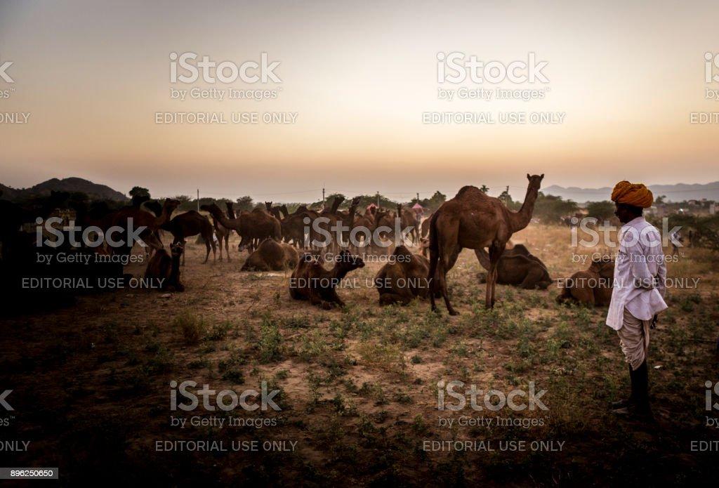 pushkar camel trade fair 2017 stock photo