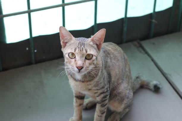 Pussy cat picture id1058111674?b=1&k=6&m=1058111674&s=612x612&w=0&h= xrxer1mr4hm1jxnj4vxu4icwjgyoz7dxpjltvyvrje=