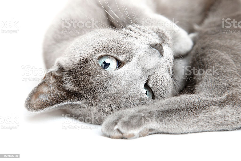 Pussy cat royalty-free stock photo
