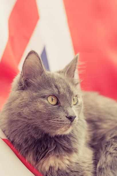 Chat assis sur Union Jack - Photo