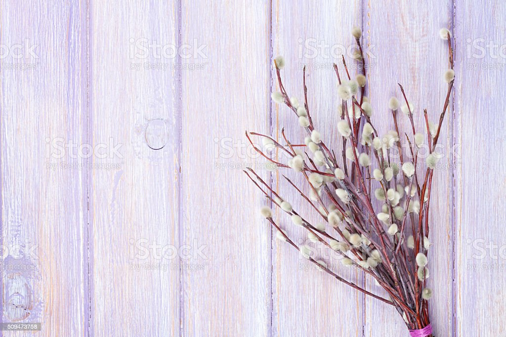 Pussy willow bunch stock photo