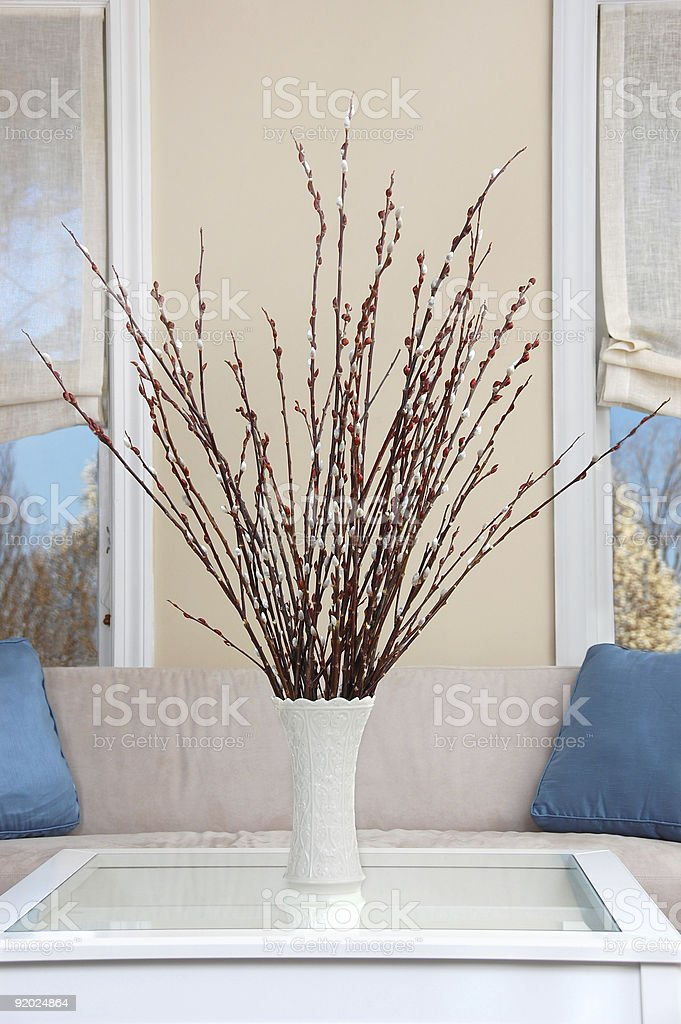 Pussy Willow stock photo