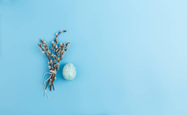 Muschi-Weiden und bemaltes Ei auf blauem Pastell-Hintergrund – Foto