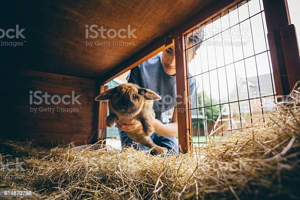 Putting the rabbit back picture id614870786?b=1&k=6&m=614870786&s=612x612&h=4cdgbhtopeblaw6fz6xlro9bu9vv6sp9ixjqvqe7cqm=