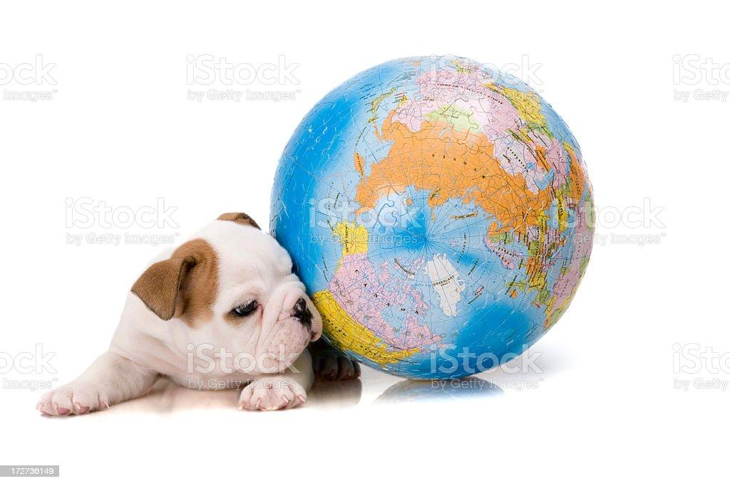 puzzle world an bulldog royalty-free stock photo