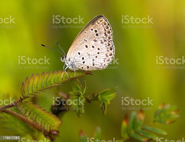 Pygmy grass blue picture id179312287?b=1&k=6&m=179312287&s=612x612&h=bda7 fvq8yf 9fbw7 sdiciav6pw9ktoysl5a8qpsdc=